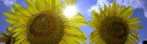 Photovoltaik - Die Kraft der Sonne